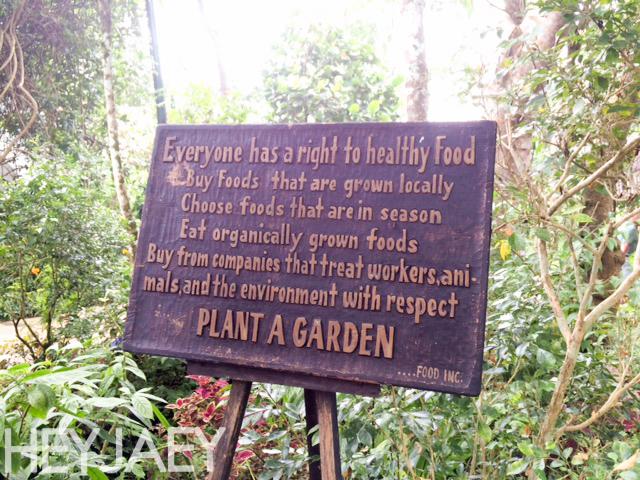 heyjaey sonya's garden