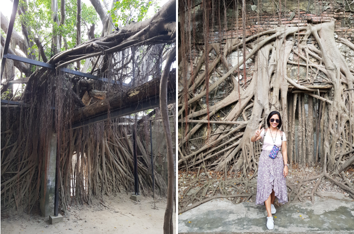 anping tree house
